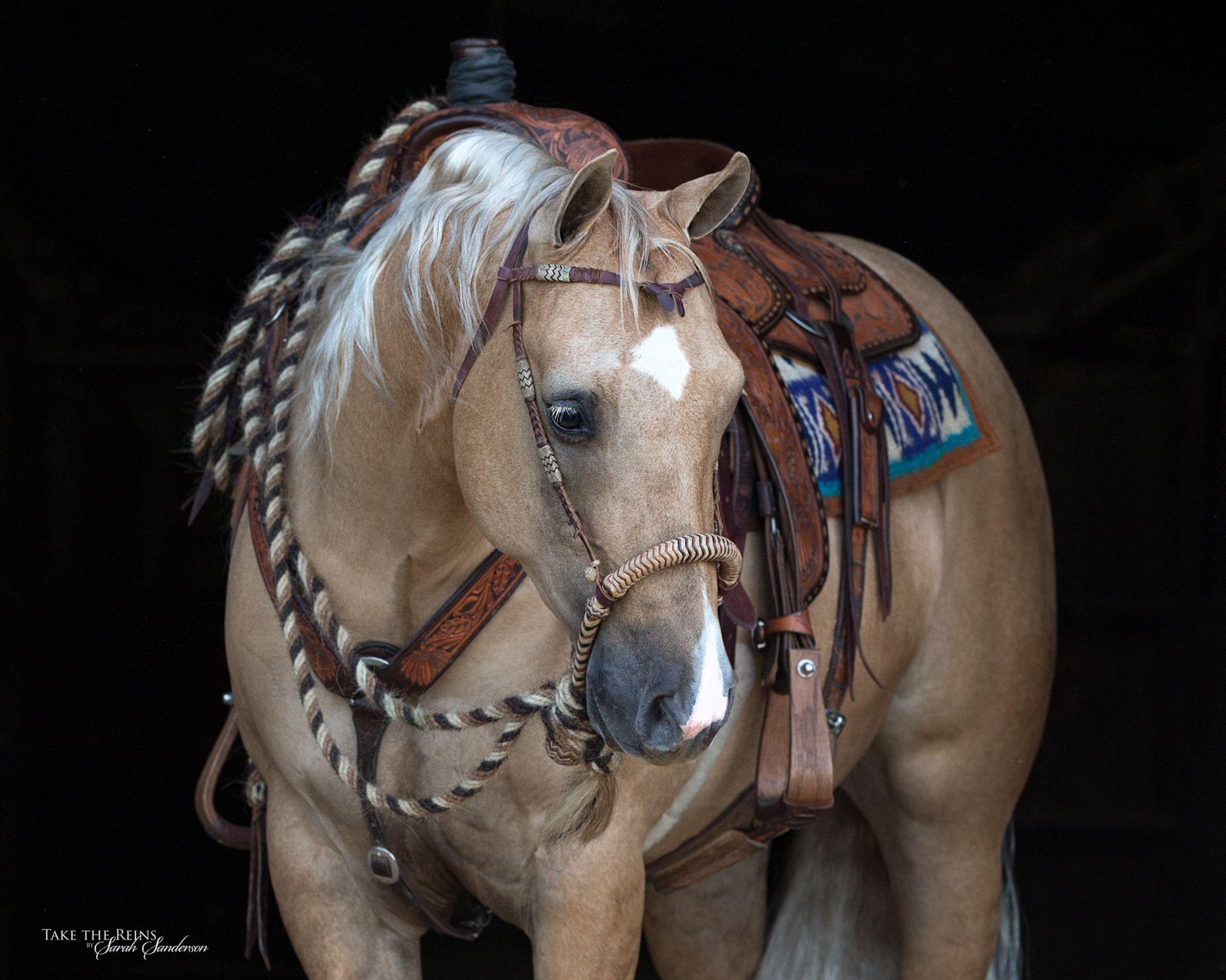 Mozaun McKibben Performance & Versatility Horses